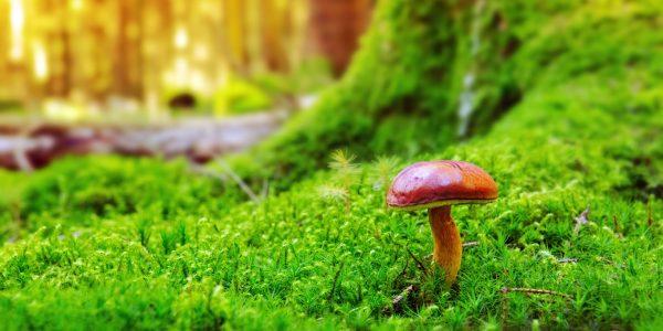 Pilz im Wald als Metapher für die Frage, wie Versicherer der Digitalisierung mit einer bimodalen IT gerecht werden können