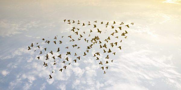 Vögel fliegen in Pfeilformation als Metapher für PSD2 – Finanzinstitute zu ihrem Glück gezwungen